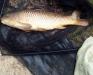 Bill Whipps | Common | Bog Grove