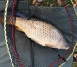 Ian Crozier | Common | 14lb | Little Park