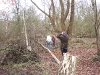 Work Party | Totham Pit | Clearing/Burning dead/fallen trees on the island