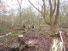 Totham Pit | Clearing/Burning dead/fallen trees on the island Pic 3