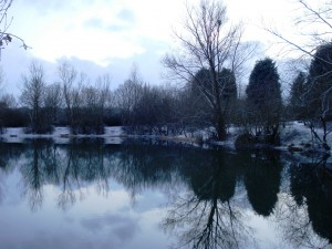 Bog Grove Snow
