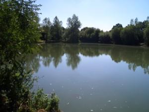 Bog Grove Summer 1