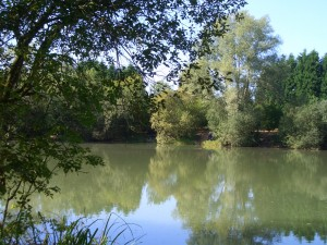 Bog Grove Summer 3