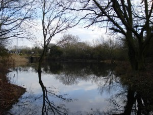 Railway Pond 4
