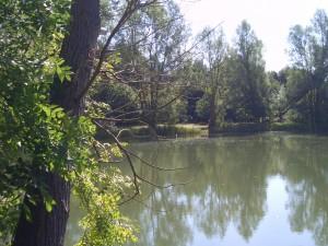 bog-grove-summer-2